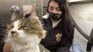 FULL CAT GROOMING
