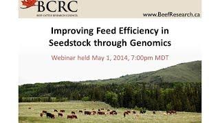 Improving Feed Efficiency in Seedstock Through Genomics (BCRC Webinar)