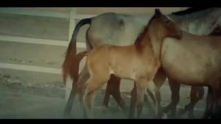 Calibre 50 - Amor Del Bueno (Vídeo Oficial)
