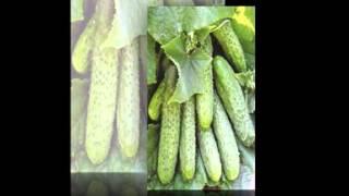 купить семена овощей(, 2015-02-04T19:44:18.000Z)