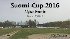 Suomi-Cup 2016 • Afghan Hounds