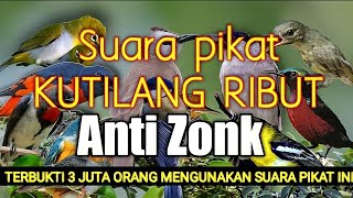 Download Mp3 Kombinasi Suara Pikat Kutilang Ribut Anti Zonk