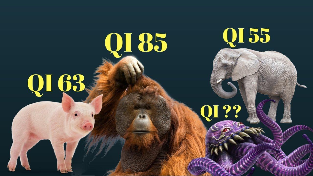quali sono gli animali con il quoziente intellettivo pi