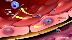 The Role of Angiotensin II in the Process of Atherosclerosis