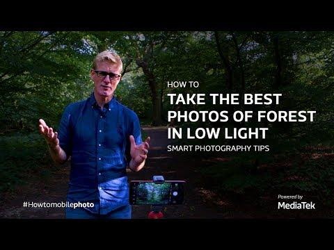 how-to-take-the-best-photos-of-forest-in-low-light- -smart-photography-tips
