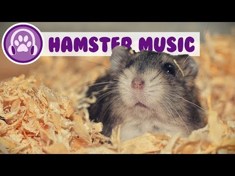 Music for Hamsters - Relaxing ASMR for Your Hamster! (TESTED)