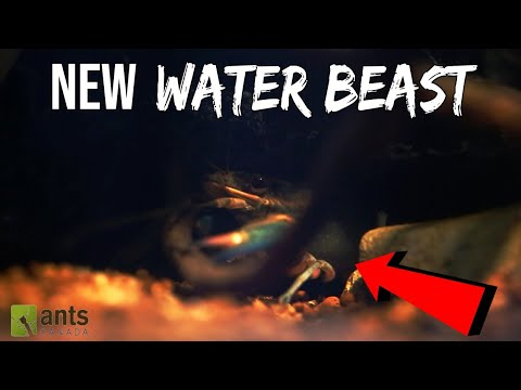 Ants vs. Kraken (Water Monster)