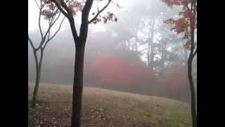 Walking at a misty park