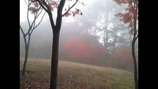 Walking at a misty park