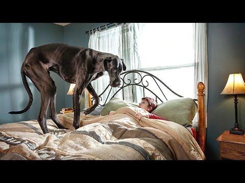Лучшие собаки для квартир! Эти породы идеально подойдут для содержания в квартирах