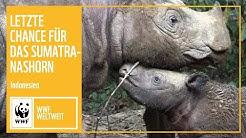 Indonesien: Letzte Chance für das Sumatra-Nashorn   WWF Weltweit   WWf Deutschland