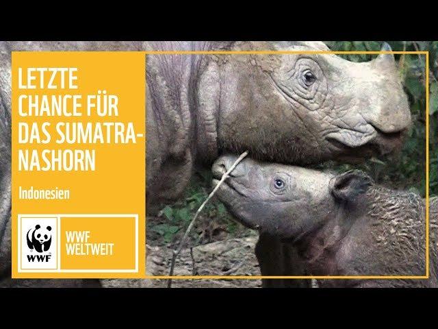 Indonesien: Letzte Chance für das Sumatra-Nashorn | WWF Weltweit | WWf Deutschland