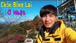 Ngắm Lá Đỏ - Chốn Bồng Lai Ở Nhật Bản || San Vlog
