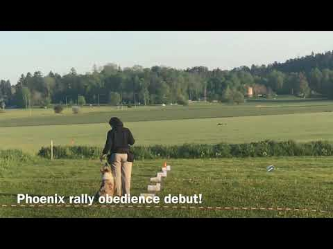Phoenix Rally Obedience debut