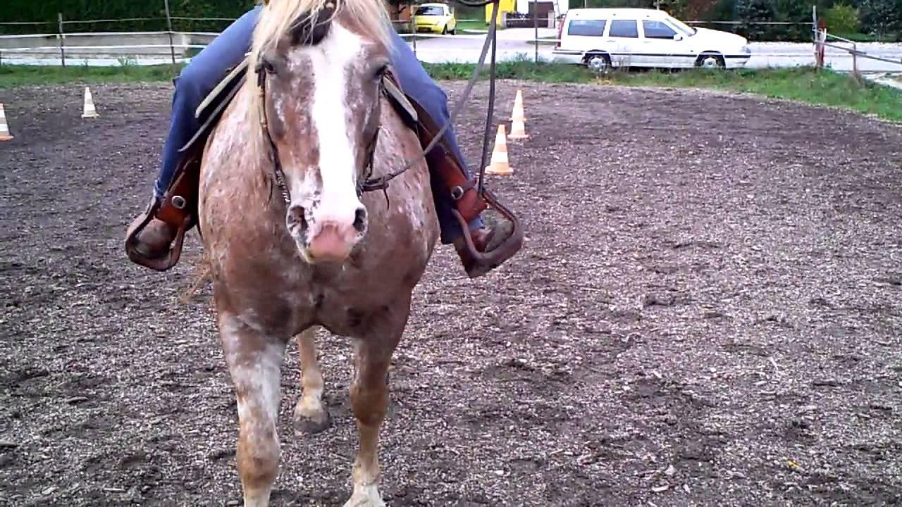 ich habe ein pferd