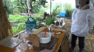 菜園だより150617梅・蜂・bbジュース