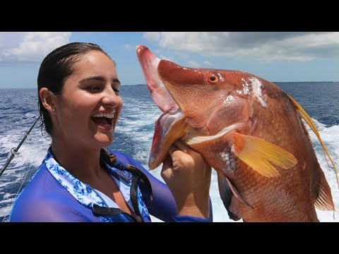 GIANT Hogfish SPEARED!!!! -Catch Clean Cook
