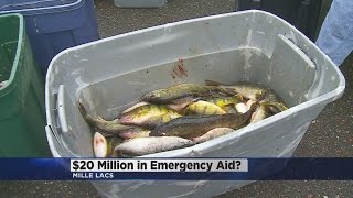 dnr proposes possible ban on walleye fishing on lake mille lacs