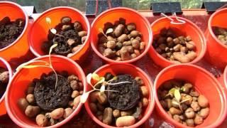 Сравнение способов выращивания салата и разных сортов салата. Часть 1.(Видео о первой попытке вырастить салат на балконе на гидропонике. Разные способы посадки и разные сорта,..., 2016-05-31T12:27:18.000Z)