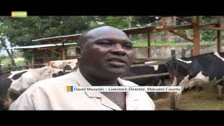 Smart Farm: Dairy Farming Makueni