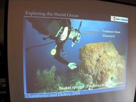 Ocean Life - Sponges to Worms