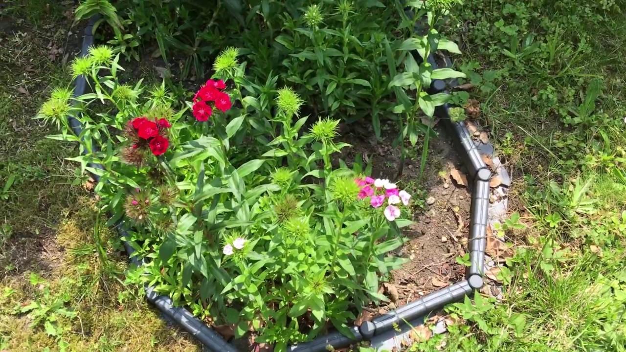 Gartenpflanzen Pflanzen Garten