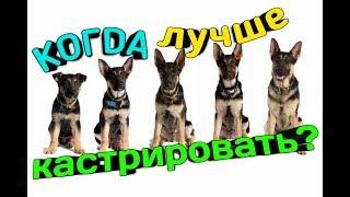 В каком возрасте ЛУЧШЕ КАСТРИРОВАТЬ собаку? Мокрый нос