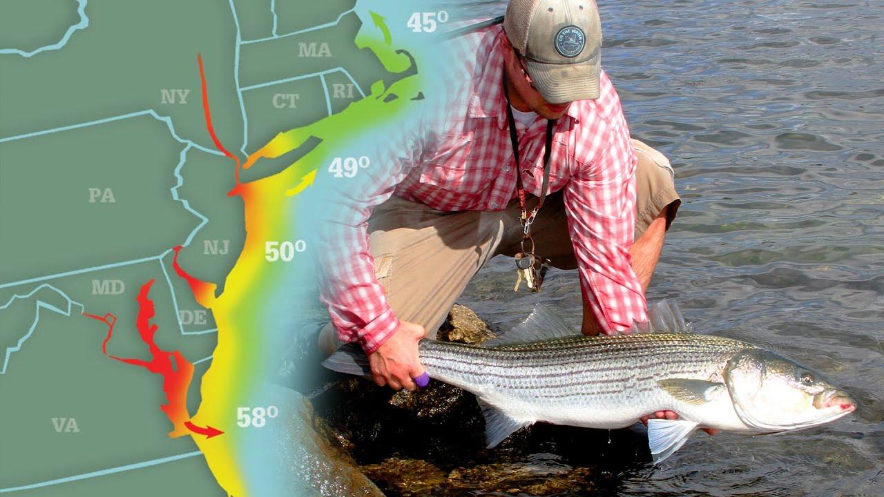 Big Striped Bass & Minnow Plugs | Striper Season Update Ep. 5