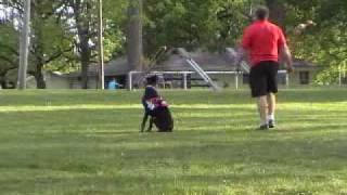Service Dog In Training Titan 4_2010.wmv