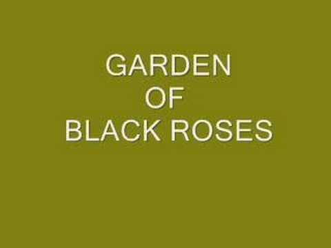 Garden Of Black Roses.