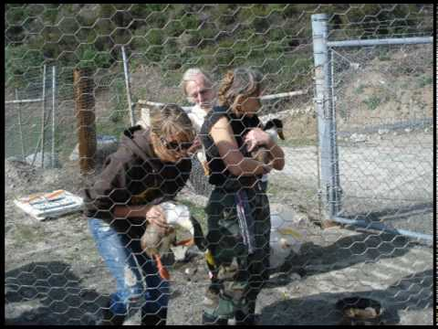Haines Canyon Duck Rescue