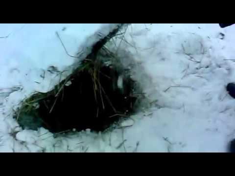 Ловля вьюна зимой ловушками