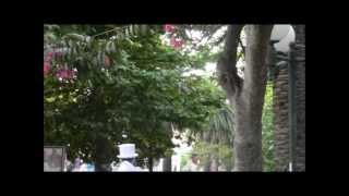 Наш отдых в Черногории-2012: Бечичи, Villa Ritsa hotel(Летом 2012 года мы отдыхали в прекрасной Черногории, жили в отеле Villa Ritsa (г.Бечичи). Ездили сами, без турфирмы,..., 2012-07-17T08:37:17.000Z)