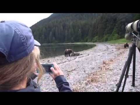 Alaska Brown Bear encounter!!!
