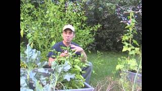 5 Garden tips in Less than 5 minutes!