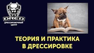 Теория и практика в дрессировке !с чего начать дрессировку или обучение собаки