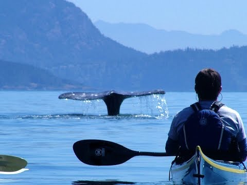 Anacortes Kayak Tours / San Juan Islands Sea Kayaking