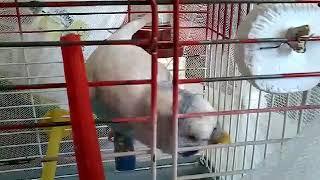 Kuşunun hâller😂😂😂😂😂😂