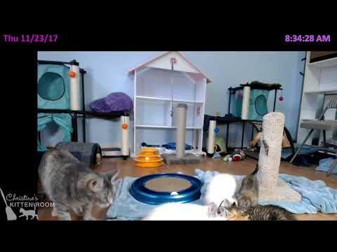 Jolene & the Country Music Kittens - Thur Nov 23 Morning