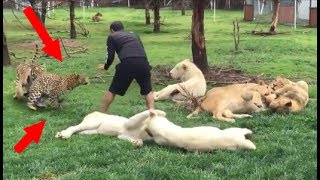 Quand les animaux sauvent des humains