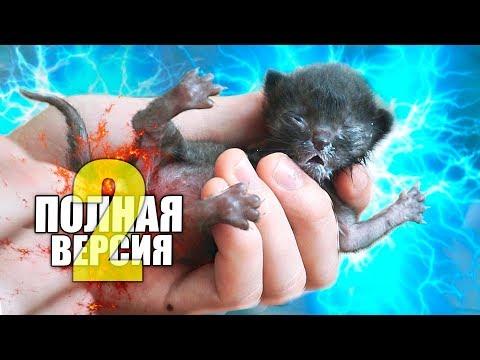 Спасение новорожденного котенка.
