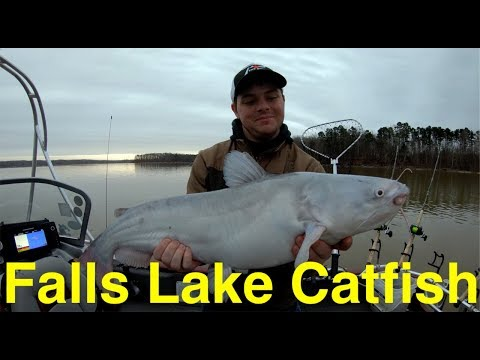 Falls Lake Spring Catfish