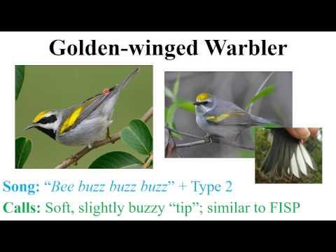 CEAP birds - warblers