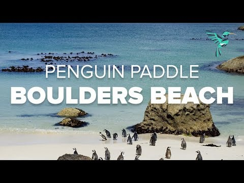 Penguin Paddle at Boulder's Beach