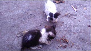 Two feral kitten in the garbage dump.