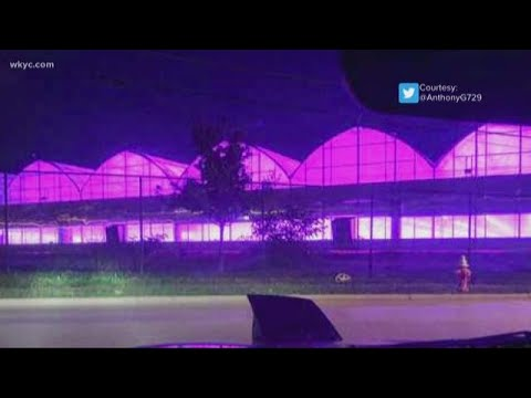 Purple rain in the skies over Cleveland? The truth behind the purple lights over the city