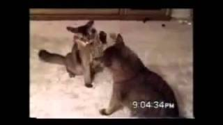 Подборка приколов с котами. Декабрь 2014