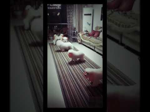 Jumping Dog WhatsApp Status Video