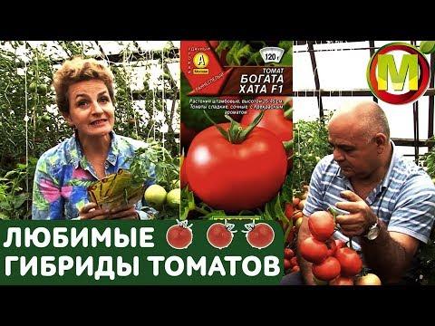 ЛЮБИМЫЕ ГИБРИДЫ ТОМАТОВ: Богата Хата F1 | урожайные | томатов | любимые | гибриды | томаты | отзывы | богата | урожа | видео | хата