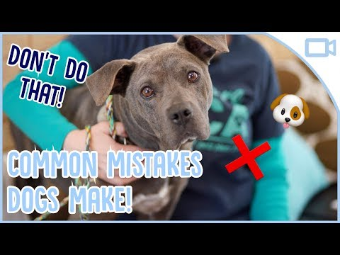 common-mistakes-dog-owners-make!